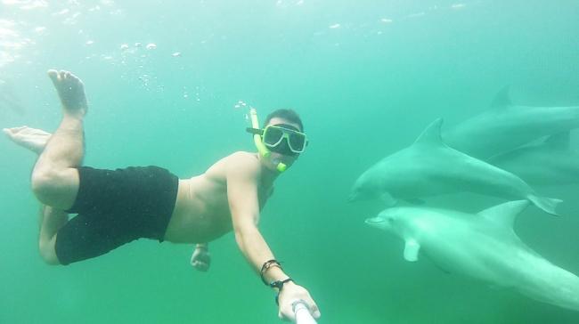 best jobs dauphins