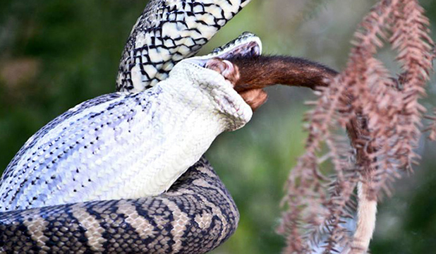 Python - Opposum