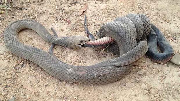 python - serpent